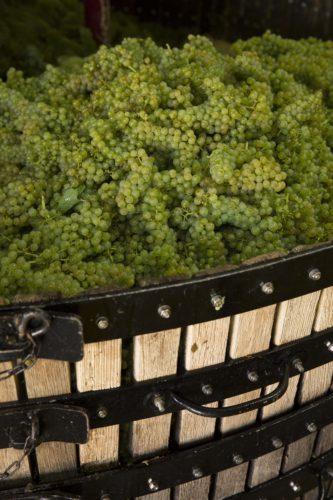 Perrier-Jouët - Vineyards 7