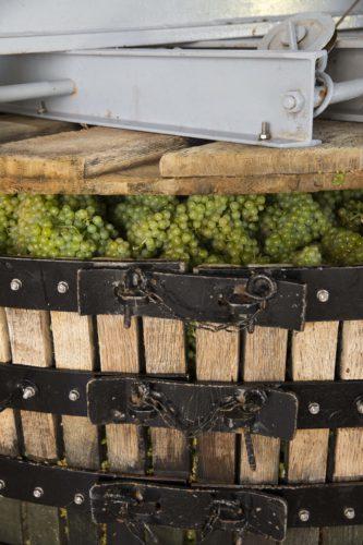 Perrier-Jouët - Vineyards 6